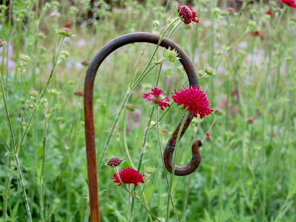 Garden Hook
